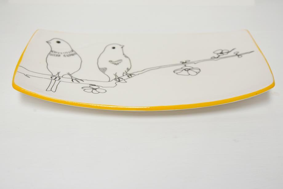 platter-bird-yellowrim