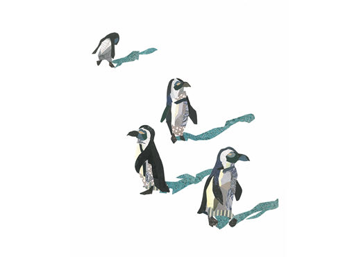 African Penguins Collage