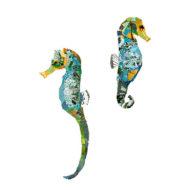 knysna seahorses collage