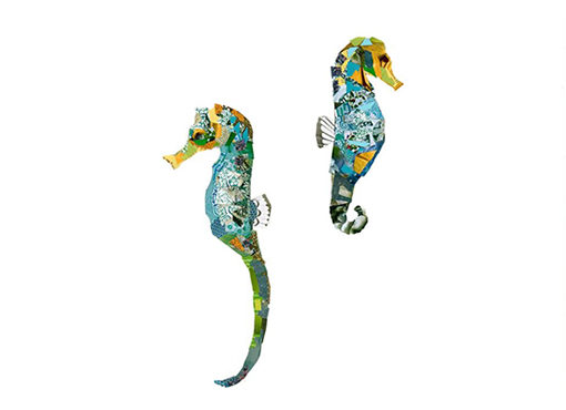 knysna seahorses collage