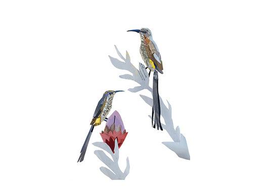 Cape Sugar Birds Collage